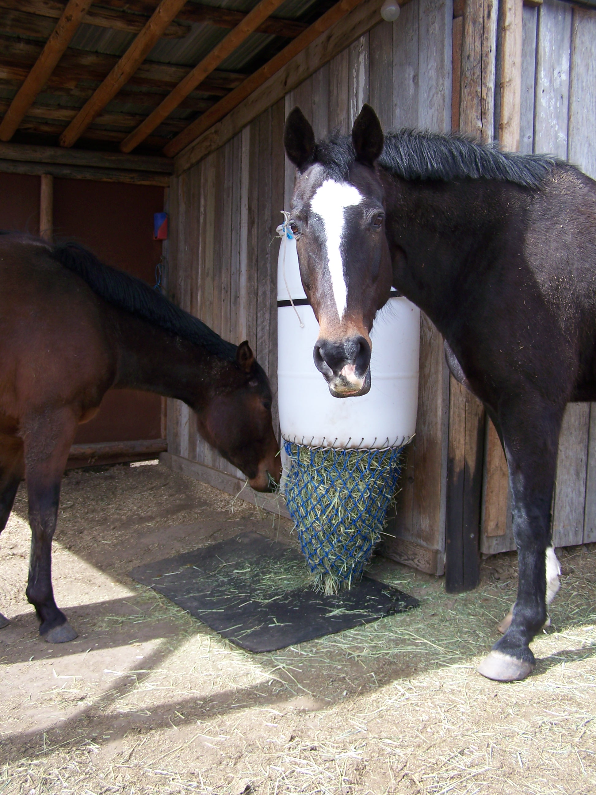 natural feeders horse for feeding hay horses haygain best pages a slow position feeder uk